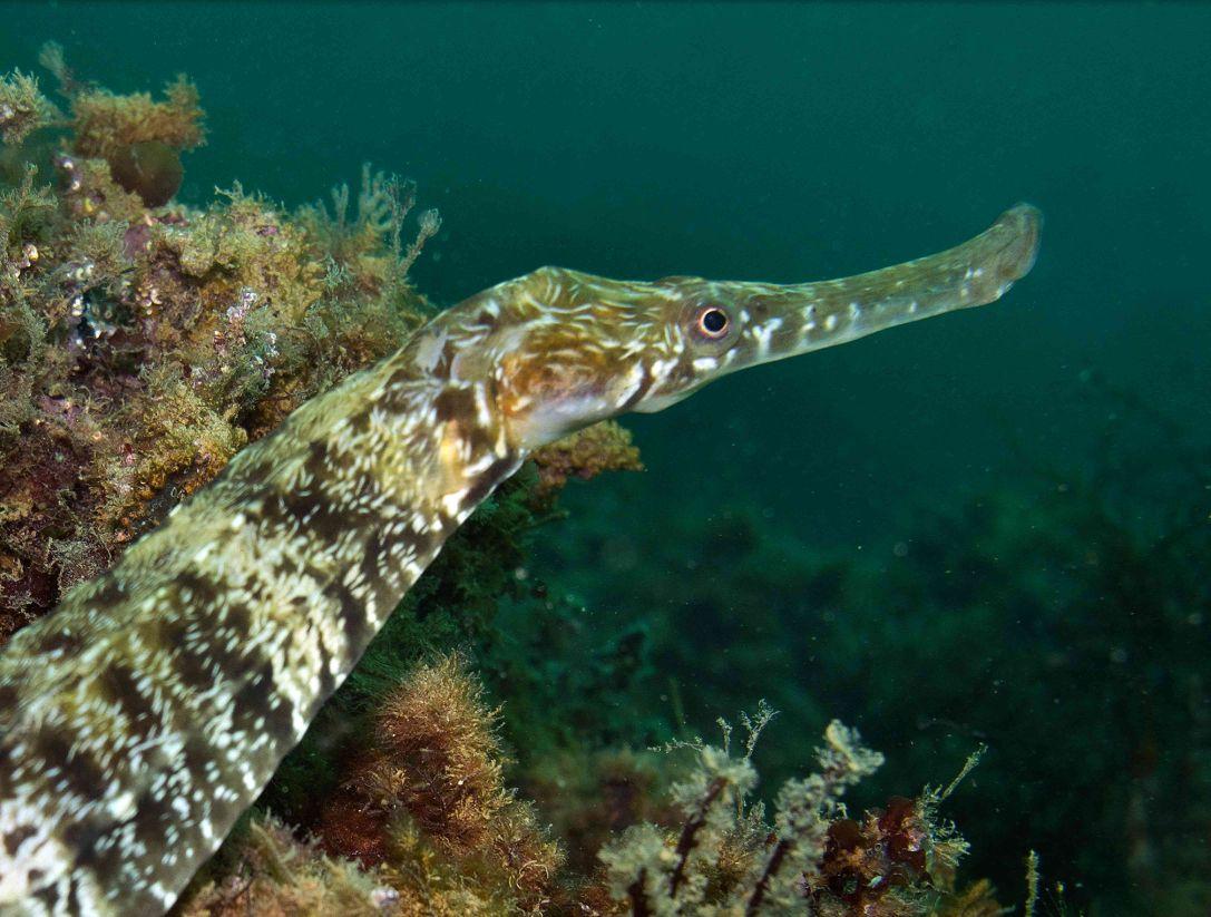 виды рыб черного моря фото конечно