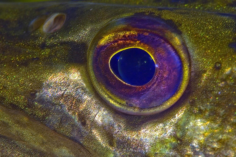 Как сделать рыбьим глазом