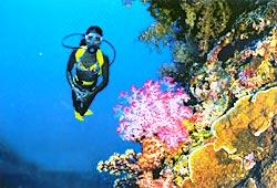 Каждый дюйм коралловых стен в Палау наполнен жизнью