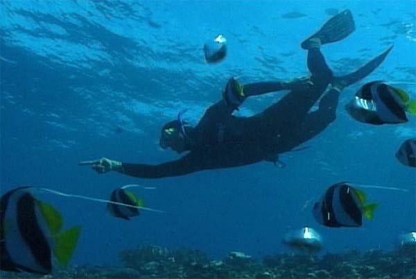 Подводная охота. Сафари по Мозамбику и ЮАР