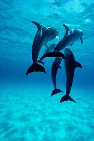 Дайвинг. Что вы знаете о дельфинах?