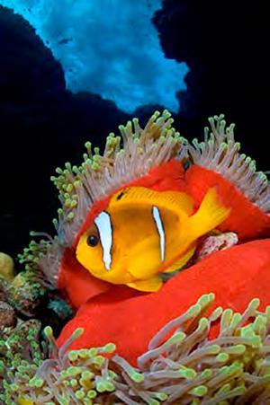 Короткий фокус широкоугольного объектива под водой