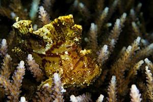 Подводная фотография. Фотосъемка в грязи.