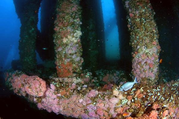 Подводная фотография. Особенности композиции. Основные ошибки.