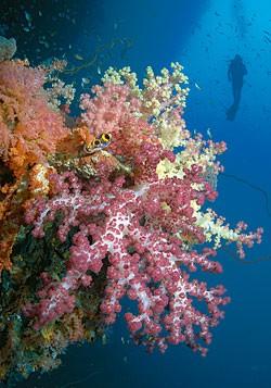 Дайвинг. Какие районы погружений наиболее популярны? Рейтинг по результатам опроса читателей журнала «Scuba Diving».