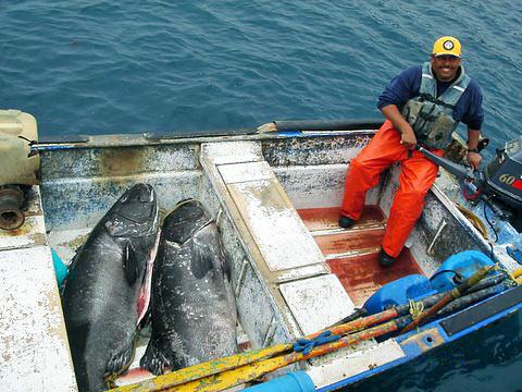Подводная охота. Трофейная охота. Часть 2: особенности охоты на трофейную рыбу и безопасность подводного охотника.