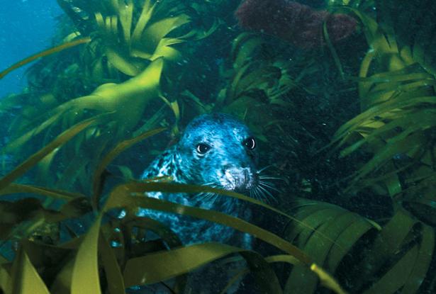 Ирландия - красочный подводный мир изумрудного острова