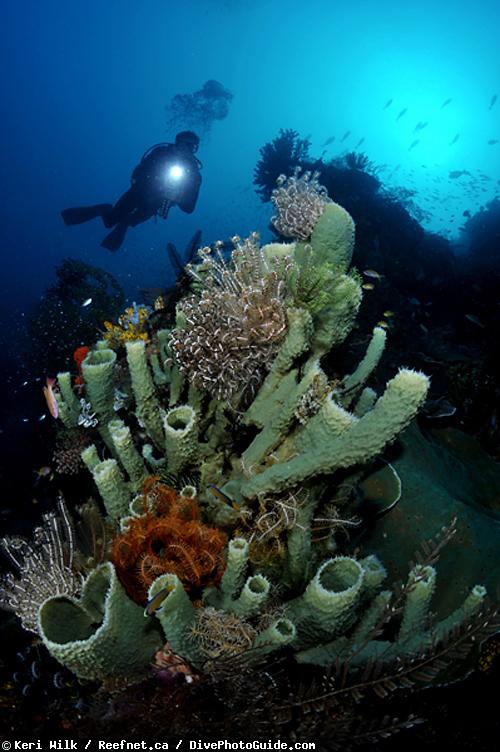 Подводная фотография. Автопортрет в режиме соло-дайвинга.