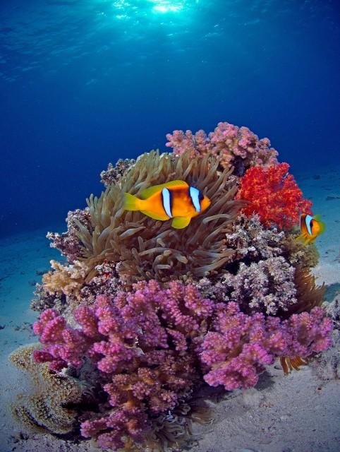 Коралловый дом