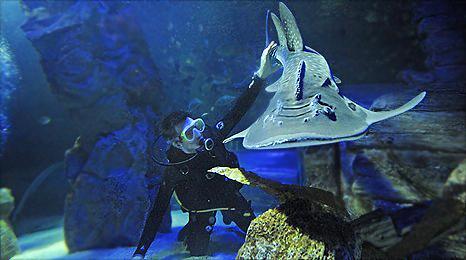 Животный магнетизм сотрудника английского океанариума