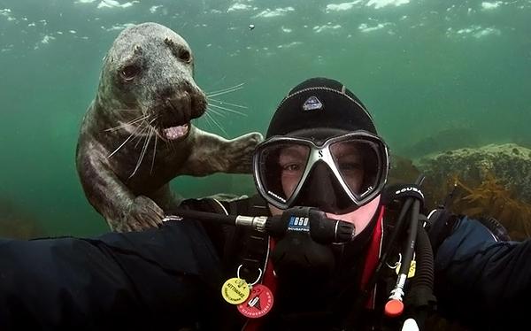 Как морской котик фотобомбу взорвал