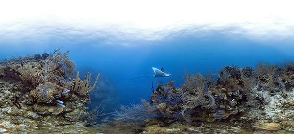 Подводные фотопанорамы в помощь ученым