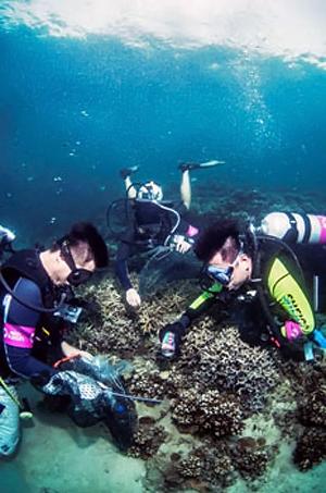 Генеральная уборка рифа попала в книгу рекордов Гиннеса