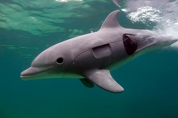 Роботы-дельфины шпионят за живыми собратьями в морских глубинах