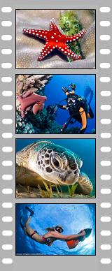 Закрытие фотоконкурса Подводного портала 2013