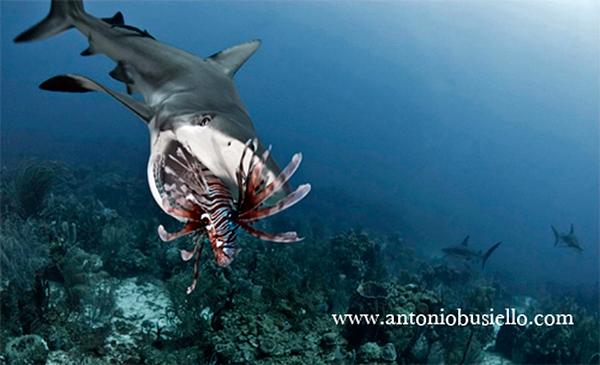 Новое меню карибских акул