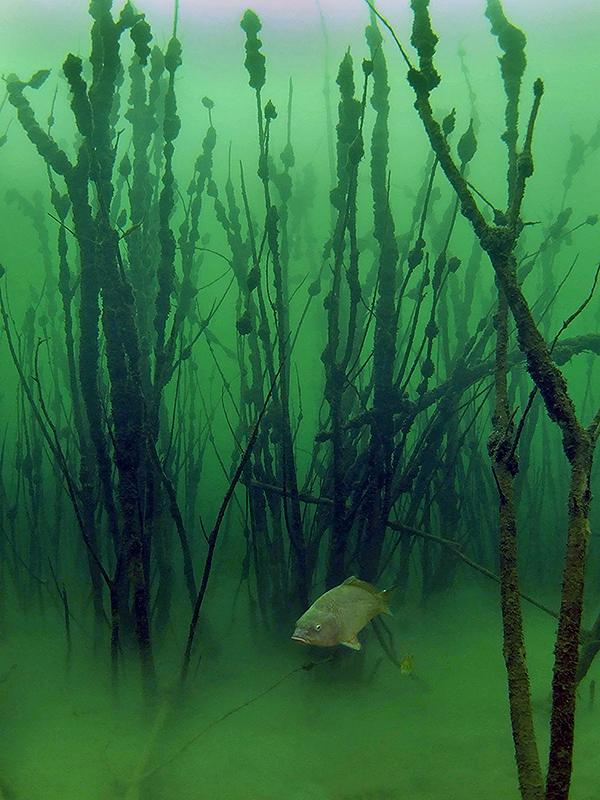 Победители фотоконкурса Подводная охота