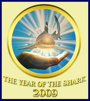 Международный год защиты акул. Зачем?