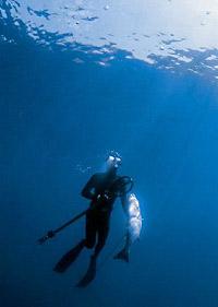 Всероссийские соревнования по подводной охоте – «Кубок РОСТО (ДОСААФ)»