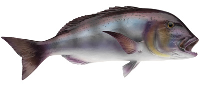 Полирезиновые рыбы O.ME.R.